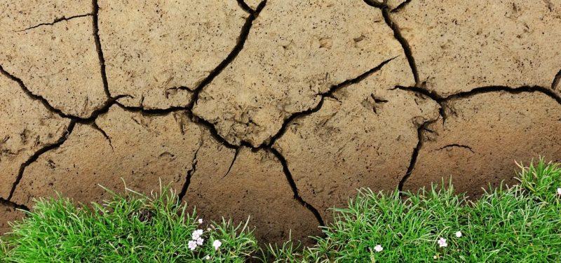 ¿Y si el cambio climático nos mata de hambre?